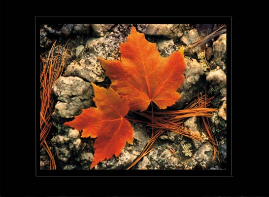 Maple Leaves on Granite (3D)